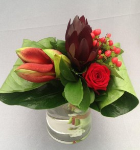 bladboeket-laag-rood-amaryllis